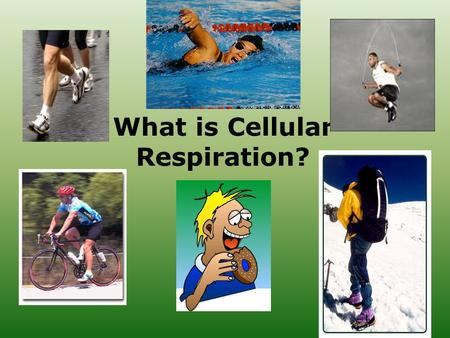What is Cellular Respiration?. Cellular Respiration Overview Transformation of chemical energy in food into ATP (chemical energy cells can use) These.