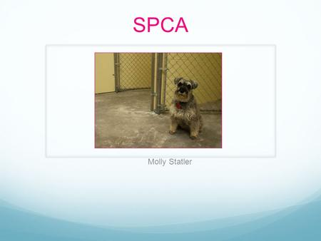 SPCA Molly Statler. Objective To make people more aware of what is happening to these poor animals who can't help themselves To show people how much of.