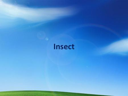 Insect. Outline Insect life cycles & damage Key insect pest groups Principles of integrated pest management (IPM)