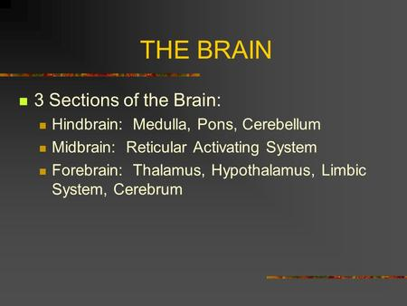 THE BRAIN 3 Sections of the Brain: Hindbrain: Medulla, Pons, Cerebellum Midbrain: Reticular Activating System Forebrain: Thalamus, Hypothalamus, Limbic.