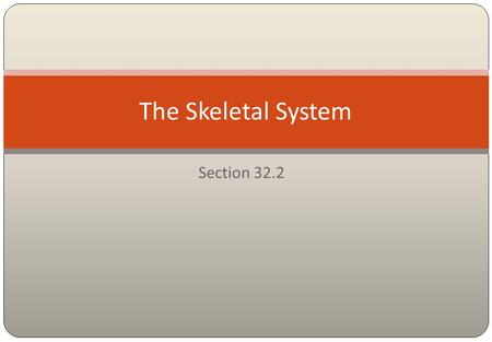 Section 32.2 The Skeletal System Structure of the Skeletal System Consists of two divisions. 32.2 The Skeletal System  The axial skeleton: skull, vertebral.