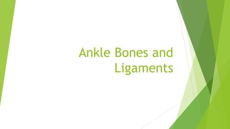Ankle Bones and Ligaments. Lateral Ankle ligaments.