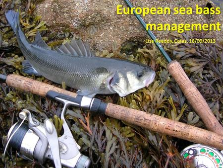 European sea bass management Lisa Readdy, Cefas. 18/09/2013.