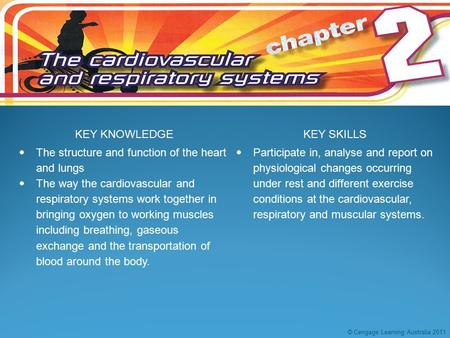KEY KNOWLEDGEKEY SKILLS  The structure and function of the heart and lungs  The way the cardiovascular and respiratory systems work together in bringing.