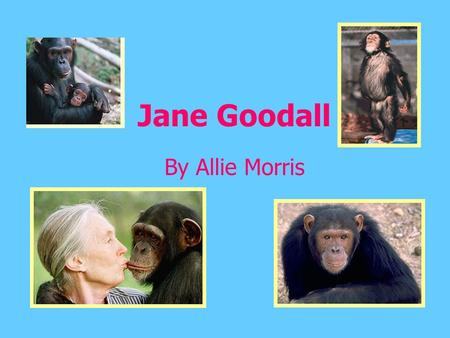 Jane Goodall By Allie Morris. Its A Girl! - Born April 3, 1934, in London England to Montimer Herbert Goodall and Margaret Myfanwe Joseph. - Loved Dr.
