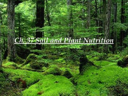 Ch. 37 Soil and Plant Nutrition. 37.1 Soil contains a living, complex ecosystem Soil particles of various sizes derived from the breakdown of rock are.