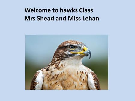 Welcome to hawks Class Mrs Shead and Miss Lehan. Homework Reading is very important. Children have a home reading record. They are expected to read every.