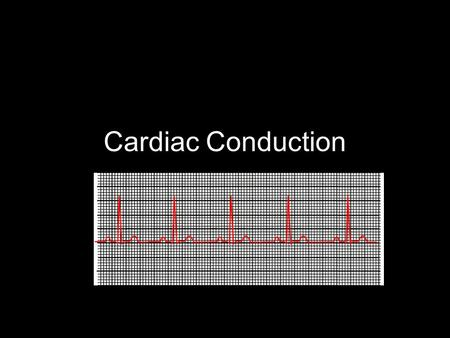Cardiac Conduction. Physiology of Cardiac Conduction The excitatory & electrical conduction system of the heart is responsible for the contraction and.