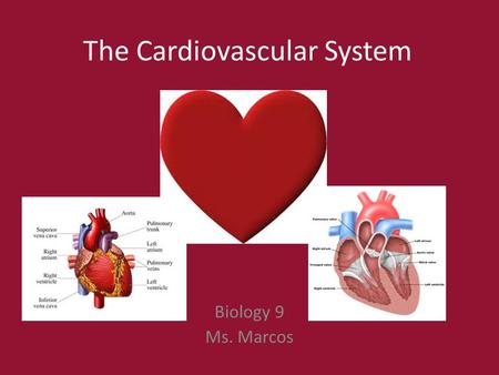 The Cardiovascular System Biology 9 Ms. Marcos. Questions you can answer after learning about the Cardiovascular System: Why could you faint if you stand.