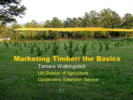 Marketing Timber: the Basics Tamara Walkingstick UA Division of Agriculture Cooperative Extension Service.