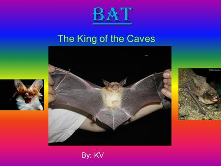 Bat The King of the Caves By: KV. Introduction. Bats are mammals It's scientific name is chiropeta It means wings on their hands They are the only mammals.