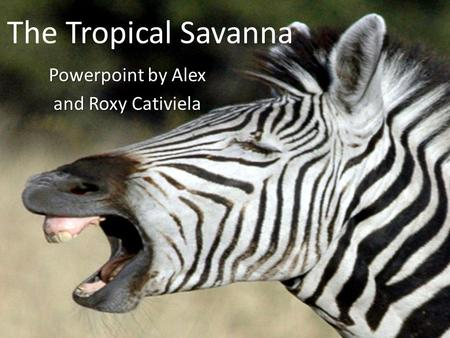 The Tropical Savanna Powerpoint by Alex and Roxy Cativiela.