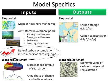 Model Specifics Maps of nearshore marine veg. Amt. stored in 4 carbon 'pools' Aboveground biomass Belowground biomass Sediments Dead organic matter Rate.