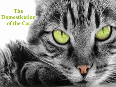 The Domestication of the Cat. Cat Domestication cats are one of the world's most popular pets the process of their domestication is not well understood.