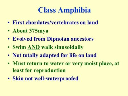Class Amphibia First chordates/vertebrates on land About 375mya Evolved from Dipnoian ancestors Swim AND walk sinusoidally Not totally adapted for life.
