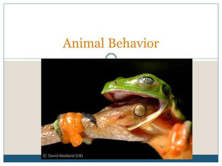 Animal Behavior. Ethology Ethology is the scientific study of animal behavior under natural conditions. It focuses on both instinctual and learned behaviors.