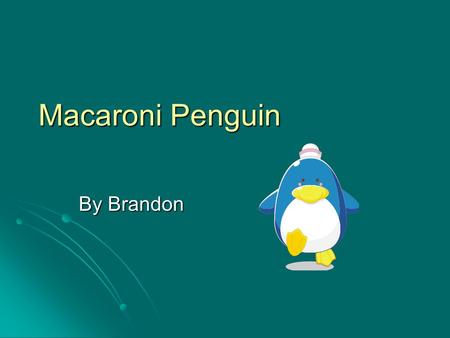 Macaroni Penguin By Brandon Bird They have feathers. They have feathers. They are warm blooded. They are warm blooded. They hatch from eggs. They hatch.