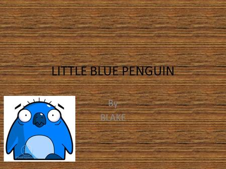 LITTLE BLUE PENGUIN By BLAKE. INTRO The little blue penguins are boys and girls. There job in life is looking after their babies.