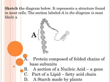Sketch t he diagram below. It represents a structure found in most cells. The section labeled A in the diagram is most likely a A A A. Protein composed.