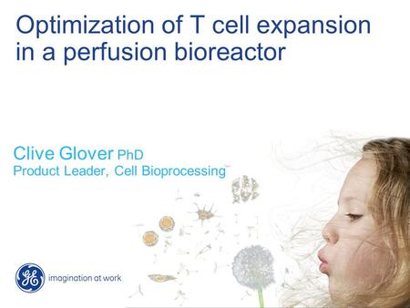 Optimization of T cell expansion in a perfusion bioreactor