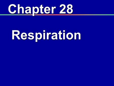 Chapter 28 Respiration. I. Introduction A. Functions of the respiratory system 1. Works in conjunction with the circulatory system 2. Provides oxygen.