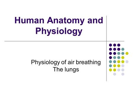 Human Anatomy and Physiology Physiology of air breathing The lungs.
