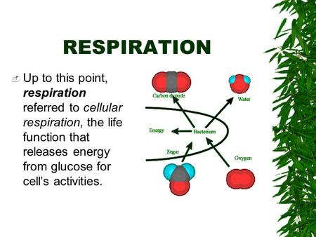 RESPIRATION  Up to this point, respiration referred to cellular respiration, the life function that releases energy from glucose for cell's activities.