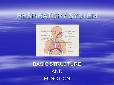 RESPIRATORY SYSTEM BASIC STRUCTURE ANDFUNCTION. OVERVIEW  BASIC STRUCTURE –NOSE, MOUTH & PHARYNX –LARYNX, VOCAL CHORDS –TRACHEA –BRONCHI AND BRONCHIOLE.