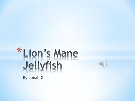 By Jonah G * The Lion's Mane Jellyfish is a known as a fish because in the water it looks like a fish.