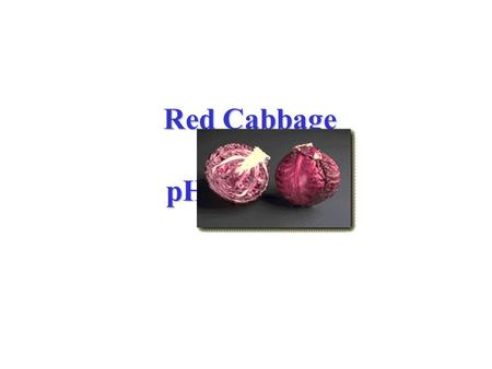 Red Cabbage as a pH Indicator Red Cabbage as a pH Indicator.