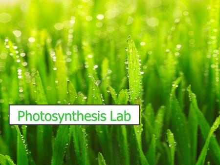 Photosynthesis Lab. Introduction: Green plants use the sun's energy to make glucose. A reactant is CO 2 gas! CO 2 + H 2 O makes a weak acid. The pH indicator.