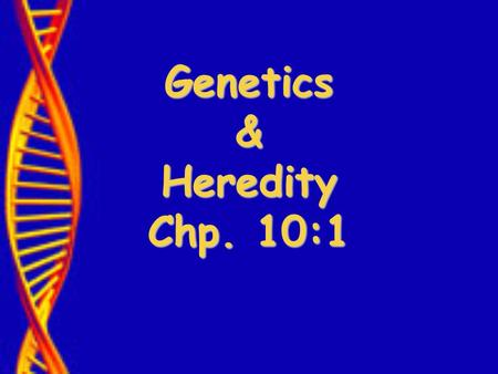 "Genetics & Heredity Chp. 10:1. Who was Gregor Mendel? ""Father of Genetics"""