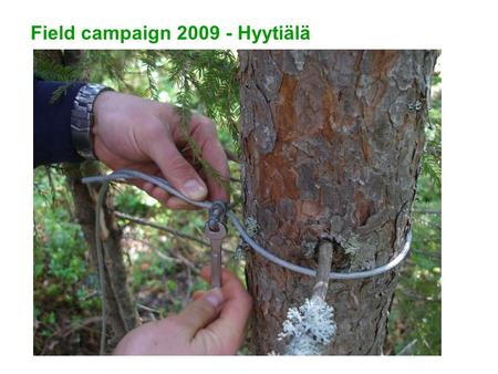 Field campaign 2009 - Hyytiälä. Aims 1) Fully mapped understory tree layers, 2-3 sites, preferably with variation in site fertility and/or upper tree.