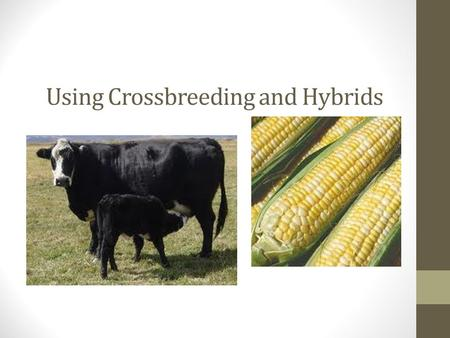 Using Crossbreeding and Hybrids. Next Generation Science/Common Core Standards Addressed: MS‐LS2‐1. Analyze and interpret data to provide evidence for.