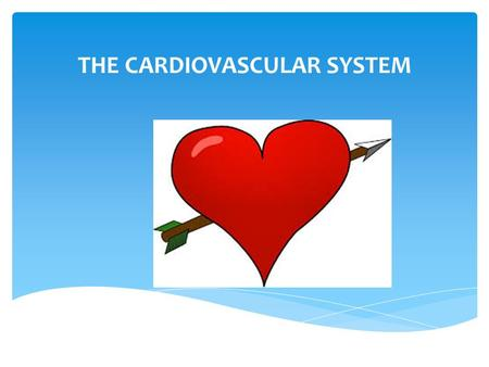 "THE CARDIOVASCULAR SYSTEM Your ""real"" heart  The muscular pump that makes the cardiovascular system work. It is made up of cardiac muscle and provides."