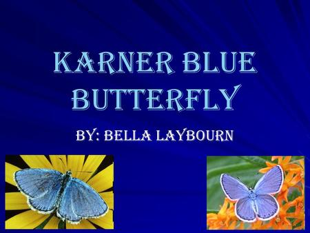 Karner Blue Butterfly By: Bella Laybourn What is a Butterfly? Diurnal (Active in Daytime) Clubbed antennae Slender body Large, broad, often conspicuously.