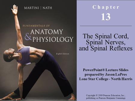 13 The Spinal Cord, Spinal Nerves, and Spinal Reflexes C h a p t e r