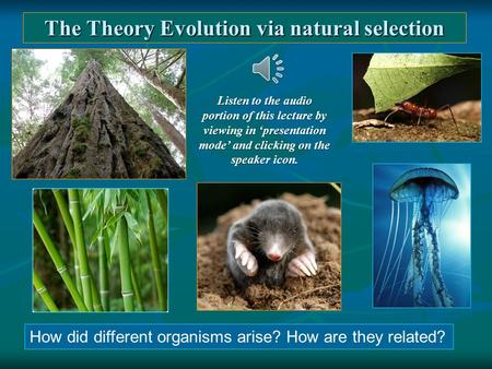 The Theory Evolution via natural selection How did different organisms arise? How are they related? Listen to the audio portion of this lecture by viewing.