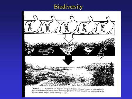 Biodiversity. Why is Biodiversity Important? Genetic diversity: