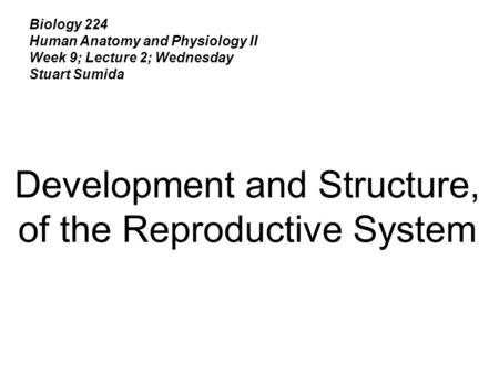 Biology 224 Human Anatomy and Physiology II Week 9; Lecture 2; Wednesday Stuart Sumida Development and Structure, of the Reproductive System.