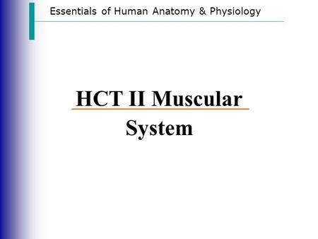 Essentials of Human Anatomy & Physiology HCT II Muscular System.