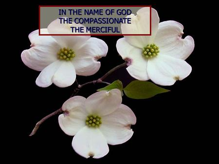 IN THE NAME OF GOD THE COMPASSIONATE THE MERCIFUL