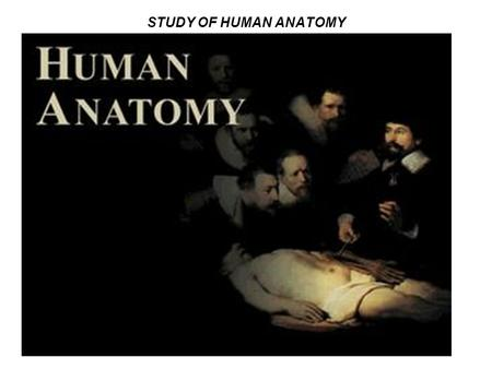 STUDY OF HUMAN ANATOMY. ANATOMY OF THE ABDOMEN DEFINITION OF ABDOMEN A region of the body bounded by the following regions:-A region of the body bounded.