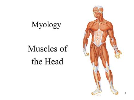 1 Myology Muscles of the Head. 2 NAMING OF MUSCLES 1. Direction of muscle fibers: a. Rectus: fibers run parallel to the midline (rectus abdominis) b.