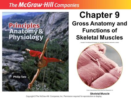 Gross Anatomy and Functions of Skeletal Muscles