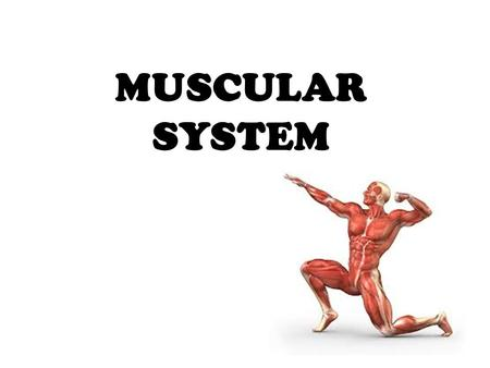 MUSCULAR SYSTEM. anatomical terminology ? Assume the anatomical position, what do these words mean? Inferior; superior Proximal; distal Medial; lateral.