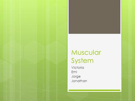 Muscular System Victoria Emi Jorge Jonathan. Muscular System Facts . There are over 600 muscles that make up the muscular system . Muscles are bundles.