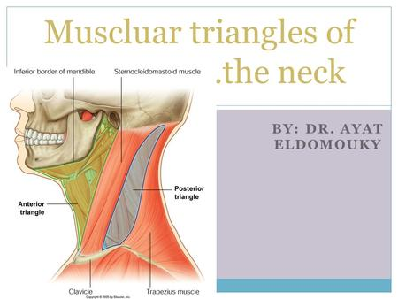 BY: DR. AYAT ELDOMOUKY Muscluar triangles of ……………….the neck.