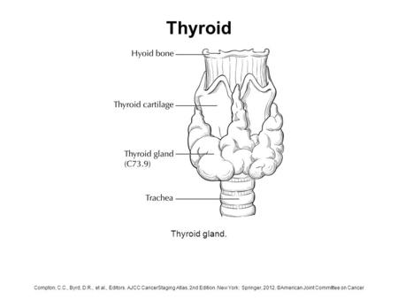 Thyroid Thyroid gland. Compton, C.C., Byrd, D.R., et al., Editors. AJCC CancerStaging Atlas, 2nd Edition. New York: Springer, 2012. ©American Joint Committee.