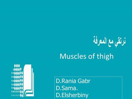 Muscles of thigh D.Rania Gabr D.Sama. D.Elsherbiny.